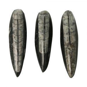 Orthoceras Fossiel