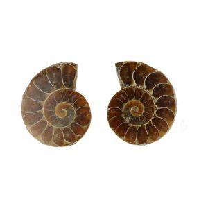 Ammoniet Paren 3-4cm